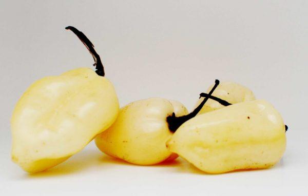 white fatalii chili