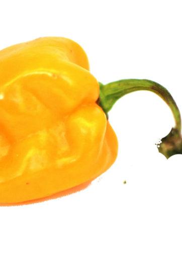 gelbe habanero chilis